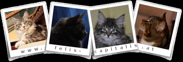 Felis-Capitalis